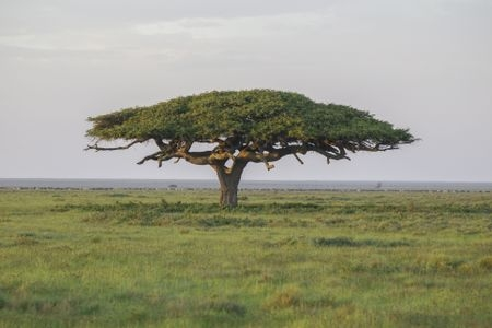 serengeti-national-park--tanzania--10558